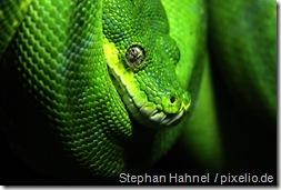 526006_R_B_by_Stephan Hahnel_pixelio.de