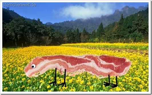 bacontier