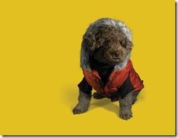 puppy-670767_1280