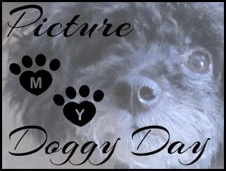 goggie day logo